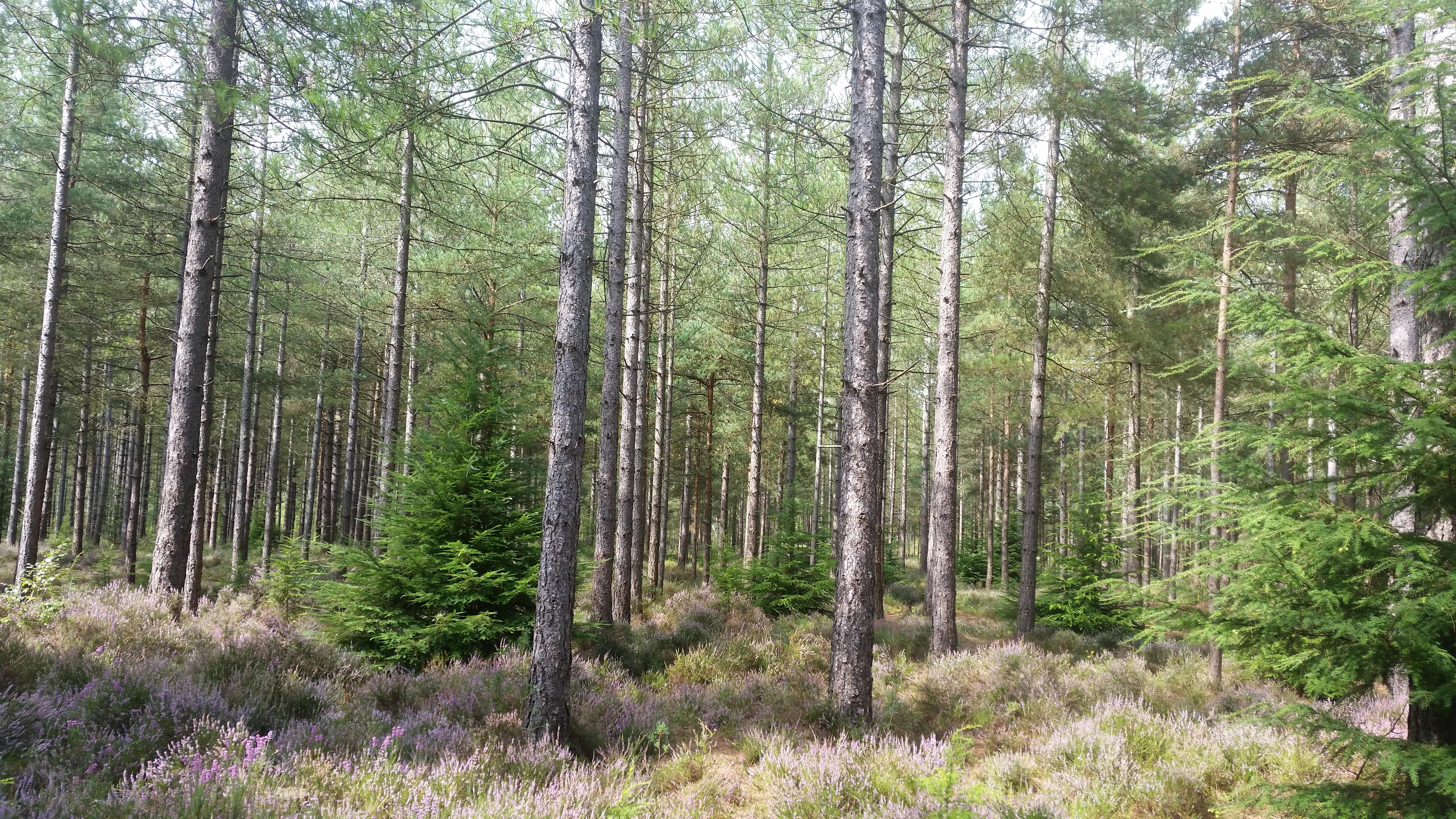 Trees, nature, zero waste week 2017