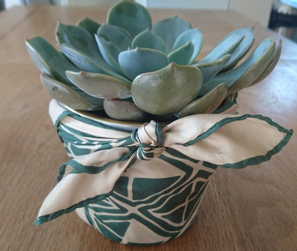 Plant, furoshiki wrapping, cactus, gift, present, unwanted gifts