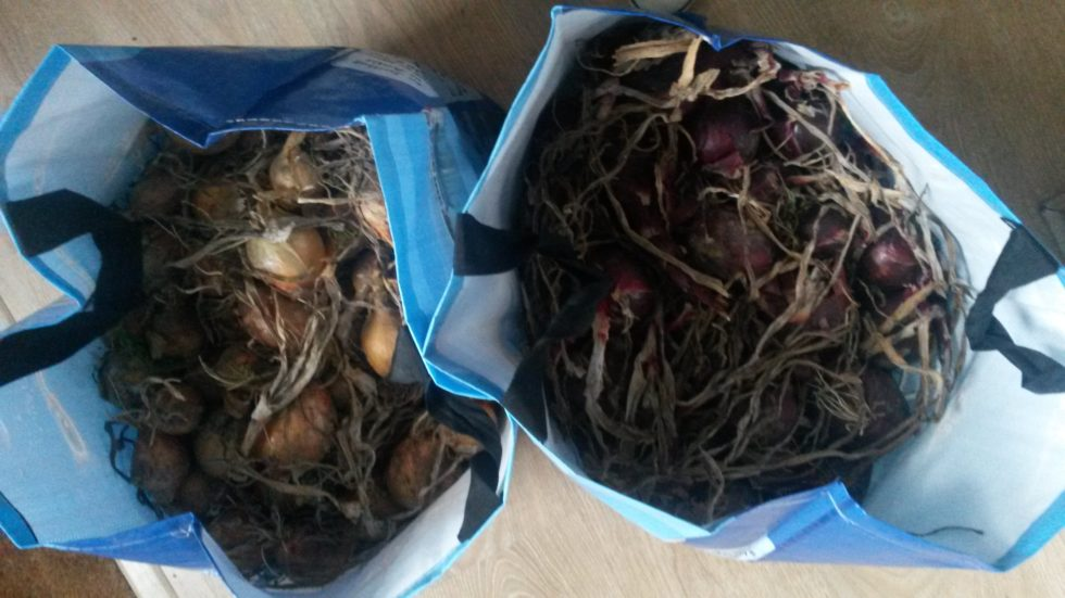 food waste when you buy in bulk