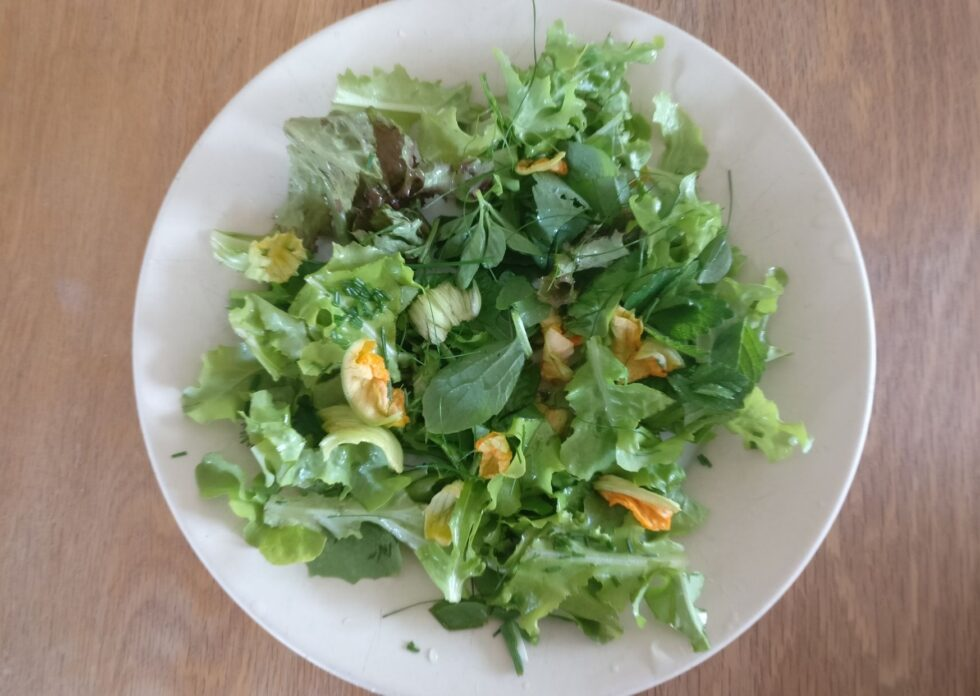 Courgette flower salad